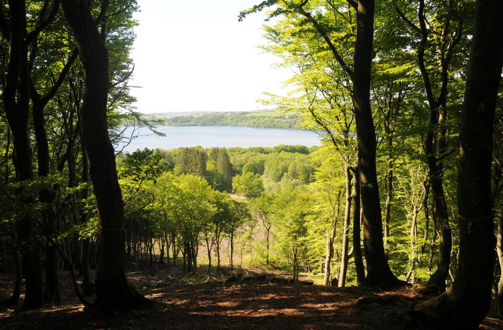 Udsigten over Knudsø fra statsskoven